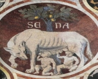Siena wild pig: traditions and culture to discover